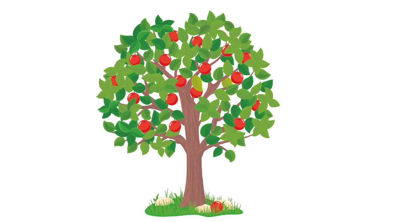 Piirroskuva omenapuusta